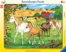 Ravensburger 06646 Rahmenpuzzle Pferde auf der Koppel 46 Teile